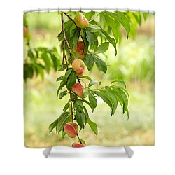 Donut Peaches Shower Curtain by Iris Richardson