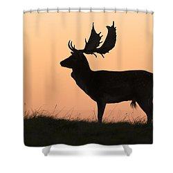 Fallow Deer Buck At Sunset Denmark Shower Curtain by Duncan Usher