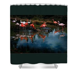 Flamingo Convention Shower Curtain by Melinda Hughes-Berland