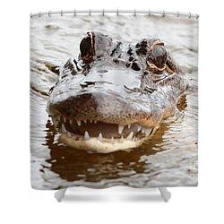 Gator Eyes Shower Curtain by Carol Groenen