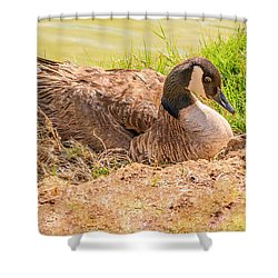 Goose Nesting Shower Curtain by Bob and Nadine Johnston
