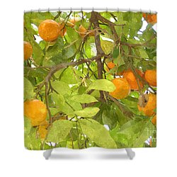 Green Leaves And Mature Oranges On The Tree Shower Curtain by Lanjee Chee