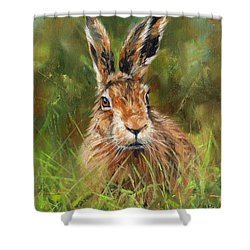 hARE Shower Curtain by David Stribbling