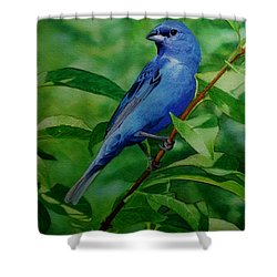 Indigo Bunting Shower Curtain by Ken Everett