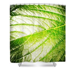 Leaf Shower Curtain by Les Cunliffe