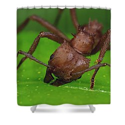 Leafcutter Ant Cutting Papaya Leaf Shower Curtain by Mark Moffett