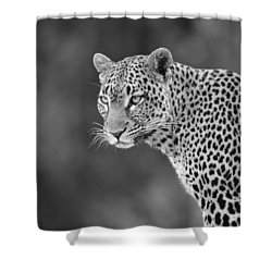 Lovely Leopard Shower Curtain by Michele Burgess