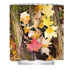 Maple Leaves Shower Curtain by Steven Ralser
