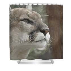 Mountain Lion Shower Curtain by Ernie Echols
