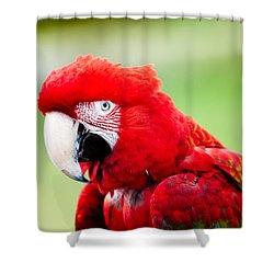 Parrot Shower Curtain by Sebastian Musial