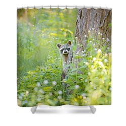 Peek A Boo Shower Curtain by Carrie Ann Grippo-Pike