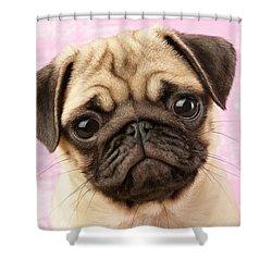 Pug Portrait Shower Curtain by Greg Cuddiford