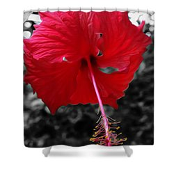 Red Hibiscus Shower Curtain by Cheryl Young