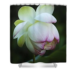 Shy Lotus Shower Curtain by Jean Noren