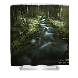 Small Stream In A Forest, Pirin Shower Curtain by Evgeny Kuklev