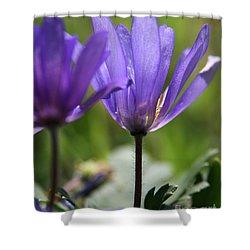 Soft Light  Shower Curtain by Neal  Eslinger