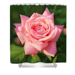 Sweet Pink Rose Shower Curtain by Carol Groenen