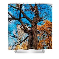 Texture Of The Bark. Old Oak Tree Shower Curtain by Jenny Rainbow