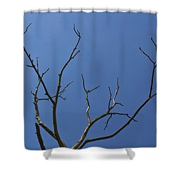 The Lightning Tree Shower Curtain by David Pyatt