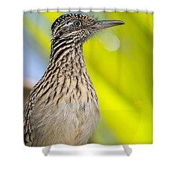 The Roadrunner  Shower Curtain by Saija  Lehtonen