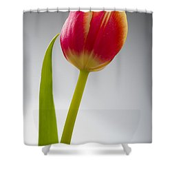 Tulip Shower Curtain by Sebastian Musial