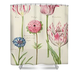 Tulips Shower Curtain by Nicolas Robert