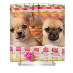 Two Chihuahuas Shower Curtain by Greg Cuddiford