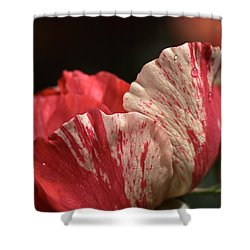 Two Toned Rose Shower Curtain by Joy Watson