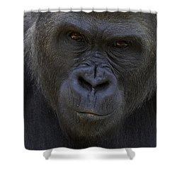 Western Lowland Gorilla Portrait Shower Curtain by San Diego Zoo