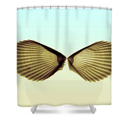 X-ray Of Angel Wing Shells Shower Curtain by Bert Myers