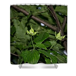 Forest Hill Gardens In Queens Shower Curtain by Carol Ailles