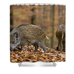 121213p274 Shower Curtain by Arterra Picture Library