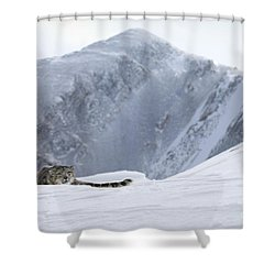 Absolute Solitude Shower Curtain by Wildlife Fine Art