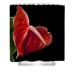 Anthem Shower Curtain by Doug Norkum