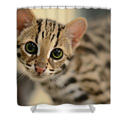 Asian Leopard Cub Shower Curtain by Laura Fasulo