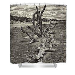 Desolate Shower Curtain by Marcia Colelli