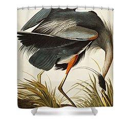 Great Blue Heron Shower Curtain by John James Audubon