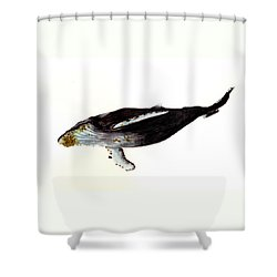 Humpback Whale Shower Curtain by Michael Vigliotti