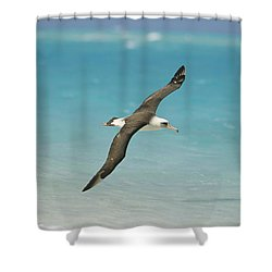 Laysan Albatross Flying Midway Atoll Shower Curtain by Tui De Roy