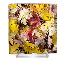 Maple Leaves Shower Curtain by Steven Ralser