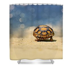 Road Warrior Shower Curtain by Laura Fasulo