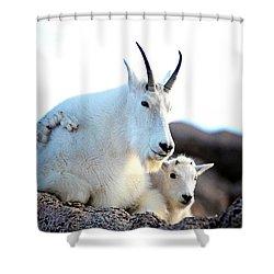 Rocky Mountain Goats 2 Shower Curtain by OLenaArt Lena Owens