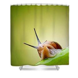Snail On Green Stem Shower Curtain by Johan Swanepoel