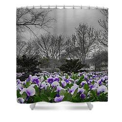 The Color Purple Shower Curtain by Douglas Barnard