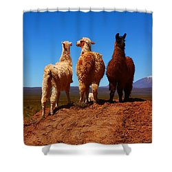3 Amigos Shower Curtain by FireFlux Studios