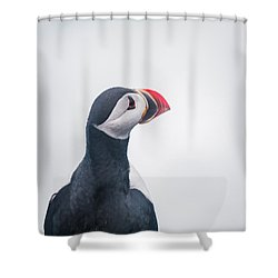 Atlantic Puffin Fratercula Arctica Shower Curtain by Panoramic Images