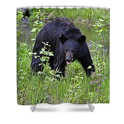 Black Bear Shower Curtain by Linda Freshwaters Arndt