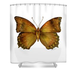 34 Charaxes Butterfly Shower Curtain by Amy Kirkpatrick