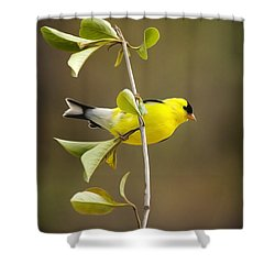 American Goldfinch Shower Curtain by Christina Rollo