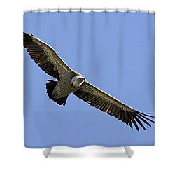 Griffon Vulture Gyps Fulvus Shower Curtain by Eyal Bartov